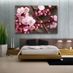 Цветки сакуры